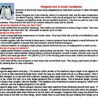 3 Penguin adaptation info sheets (three levels)