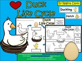 A+ Duck Life Cycle Labeling & Word Wall