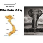 A Million Shades of Gray Book Study 11 pages