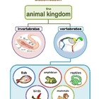 ANIMAL Kingdom Classification