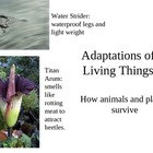 Adaptations of Living Things