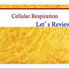 Advanced Placement (AP) Biology Review PPT: Cellular Respiration