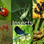 All About Insect Powerpoint