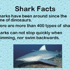 All About Sharks Powerpoint