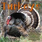 All About Turkeys ~ Close Reading Informational Text + Ext
