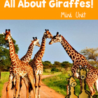All about Giraffes