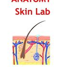 Anatomy Skin Lab - Integumentary System Lab