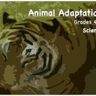 Animal Adaptation - Science Lesson - Grade 4 -5