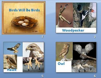 Animal Adaptations Bird Feet and Beaks