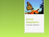 Animal Adaptations - Camouflage and Mimicry - PowerPoint P