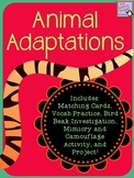 Animal Adaptations Teaching Tools