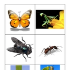 Animal Cards (to fit Differentiated Instruction Cubes)