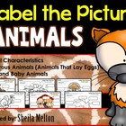 Animal Characteristics, Oviparous, Adult / Baby {What's Th