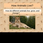 Animal Classifications -vertebrates invertebrates PowerPoint