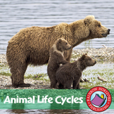 Animal Life Cycles Gr. 2-3