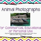 Animal Photographs for Commercial, Educational, or Personal Use