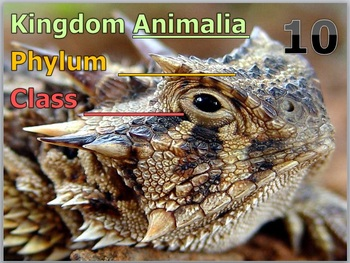 Animal Phylums PowerPoint Quiz 1-20 with Answers 82 Slides