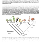 Animal Taxonomy - Understanding Classification