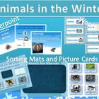 Animals In the Winter Powerpoint, Word Wall, Sorting Mat a