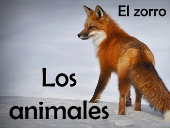 Animals (Los animales) Power Point in Spanish (72 slides)
