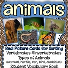 Animals! {Real pictures for sorting, recording sheets & st