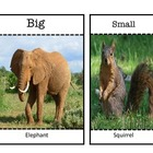 Animals opposite flashcards