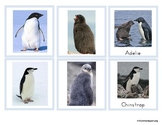 Antarctica Penguins and their Chicks