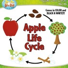 Apple Life Cycle Clipart Set — Comes In Color and Black & White!