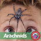Arachnids