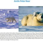 Arctic Animals Photographs, Facts and Printable Writing Worksheet