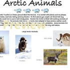 Arctic Animals of the Tundra