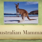 Australian Mammals Vol. 1: Introduction PowerPoint Slidesh