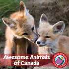 Awesome Animals of Canada