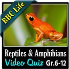 BBC Life - Reptiles and Amphibians Episode - Video Quiz