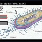 Bacteria, Bacterial Reproduction, and More Review Game