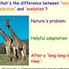 Basics of Evolution, Darwin - Lesson Presentations, Videos