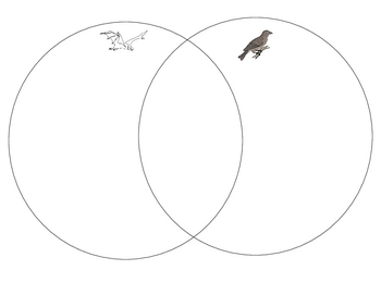 Bat and bird venn diagram