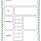 Biodiversity - Classifying Animals Graphic Organizer - Ver