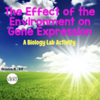 Biology Lab: Effect Of Environment On Gene Expression (Genetics)