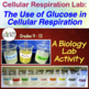Biology Lab: The Use of Glucose in Cellular Respiration