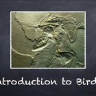 Birds Vol. 01: Introduction to Birds - PowerPoint Slidesho