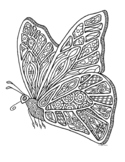 Black & White Detailed Butterfly Coloring Sheet