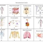 Body System Connection Cards - A Highly Effective Vocabula