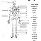 Bones of the Body Quiz