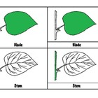Botany 3 Parts Cards - Parts of a Leaf, Flower, Plant, Tree