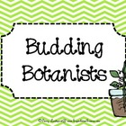 Budding Botanists {germinating science fun}