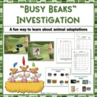 Busy Beaks Fun Animal Adaptations Hands On Investigation Activity