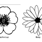 Buttercup and Daisy:  B/D Letter Sort