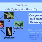 Butterflies Power Point