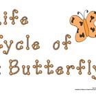 Butterfly Life Cycle - Primary Writing Activity